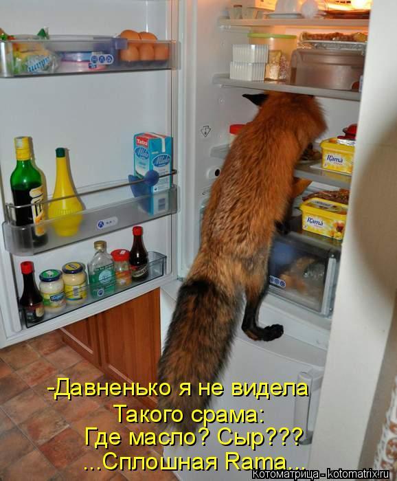 Котоматрица: -Давненько я не видела Такого срама: Где масло? Сыр??? ...Сплошная Rаmа...