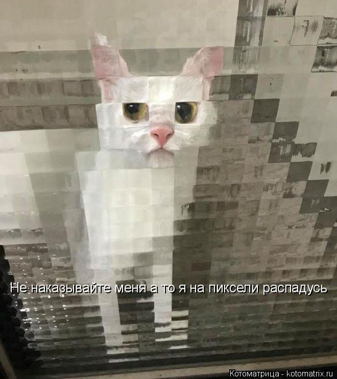 Котоматрица: Не наказывайте меня а то я на пиксели распадусь