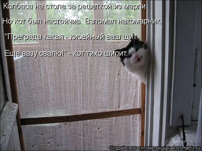 """Котоматрица: Колбаса на столе за решеткой из марли Но кот был настойчив. Взломал накомарник. """"Преграда какая - кисейный ваш щит... Ещё вазу свалю!"""" - кот тих?"""