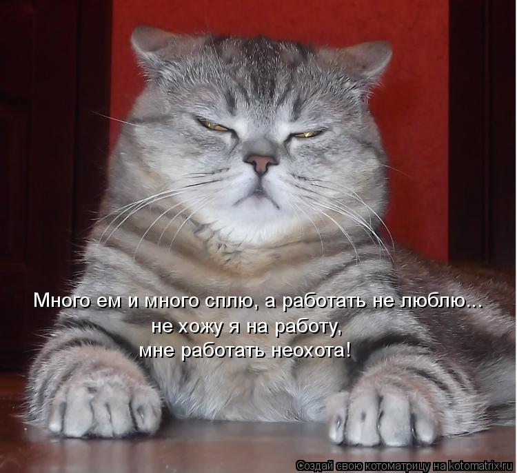 Котоматрица: Много ем и много сплю, а работать не люблю... не хожу я на работу, мне работать неохота!