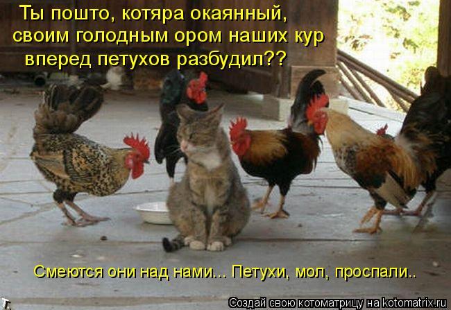 Котоматрица: Ты пошто, котяра окаянный,  своим голодным ором наших кур  вперед петухов разбудил??  Смеются они над нами... Петухи, мол, проспали..