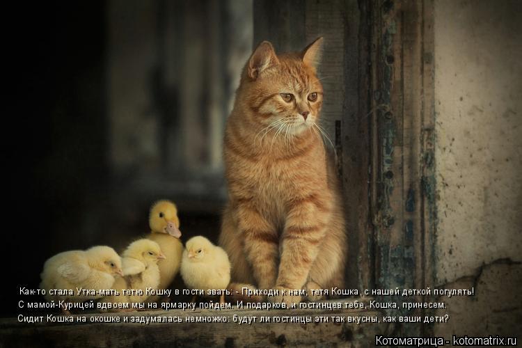 Котоматрица: Как-то стала Утка-мать тетю Кошку в гости звать: - Приходи к нам, тетя Кошка, с нашей деткой погулять! С мамой-Курицей вдвоем мы на ярмарку пой?