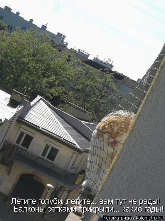 Котоматрица: Летите голуби, летите... вам тут не рады! Балконы сетками прикрыли... какие гады!