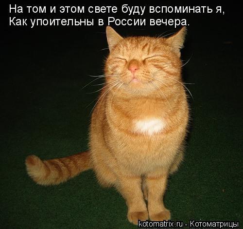 Котоматрица: На том и этом свете буду вспоминать я,    Как упоительны в России вечера.  Как упоительны в России вечера.