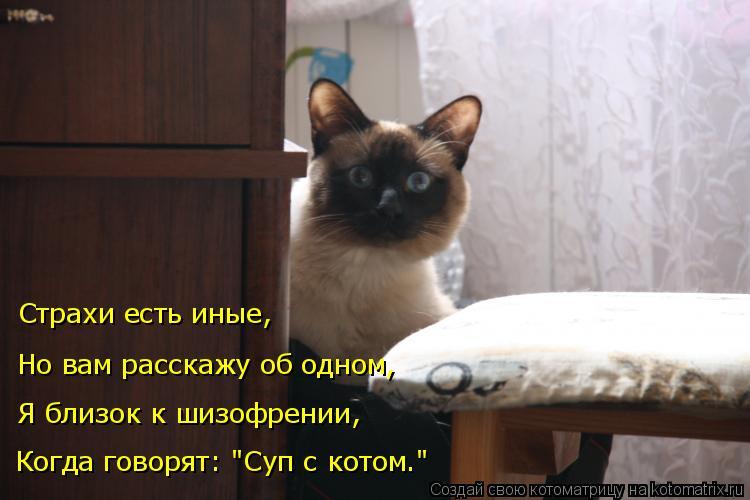 """Котоматрица: Страхи есть иные, Но вам расскажу об одном, Я близок к шизофрении, Когда говорят: """"Суп с котом."""""""