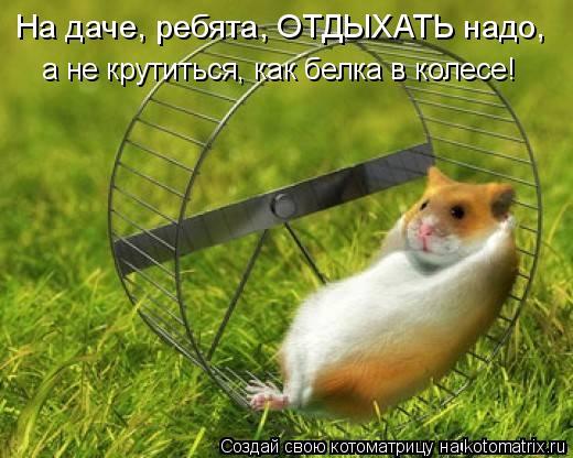 Котоматрица: На даче, ребята, ОТДЫХАТЬ надо, а не крутиться, как белка в колесе!