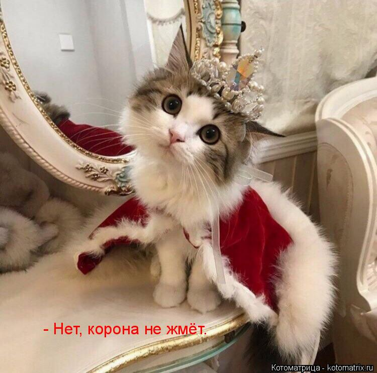 Котоматрица: - Нет, корона не жмёт.