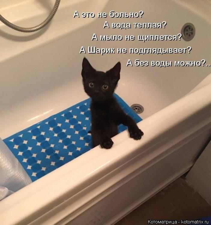 Котоматрица: А вода теплая? А это не больно? А мыло не щиплется? А Шарик не подглядывает? А без воды можно?...