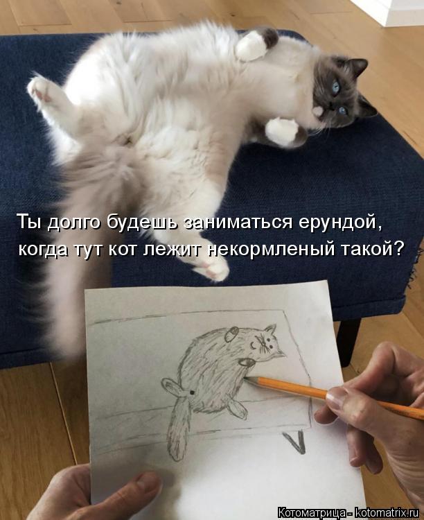 Котоматрица: Ты долго будешь заниматься ерундой,  когда тут кот лежит некормленый такой?