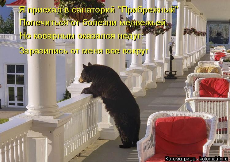 """Котоматрица: Я приехал в санаторий """"Прибрежный"""" Полечиться от болезни медвежьей.  Но коварным оказался недуг: Заразились от меня все вокруг"""