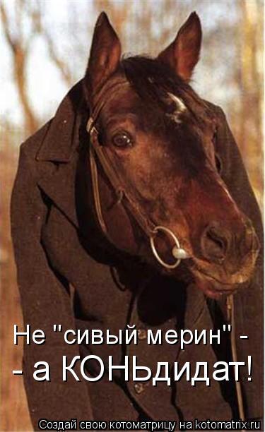 """Котоматрица: Не """"сивый мерин"""" - - а КОНЬдидат!"""