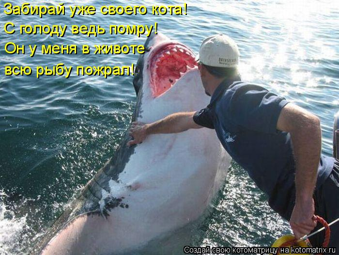 Котоматрица: Забирай уже своего кота! С голоду ведь помру! Он у меня в животе  всю рыбу пожрал!