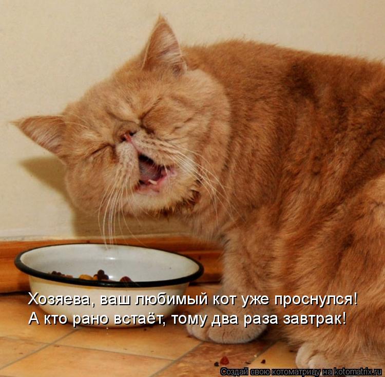 Котоматрица: Хозяева, ваш любимый кот уже проснулся! А кто рано встаёт, тому два раза завтрак!