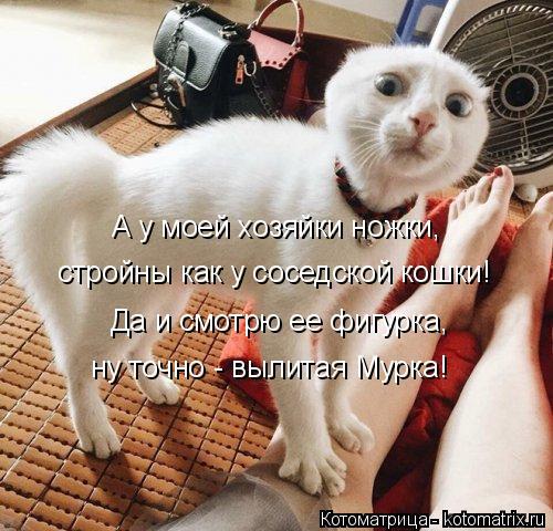 Котоматрица: А у моей хозяйки ножки, стройны как у соседской кошки! Да и смотрю ее фигурка, ну точно - вылитая Мурка!