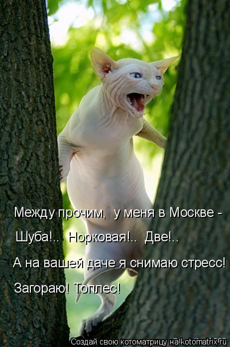 Котоматрица: Между прочим,  у меня в Москве - Шуба!..  Норковая!..  Две!.. А на вашей даче я снимаю стресс! Загораю! Топлес!