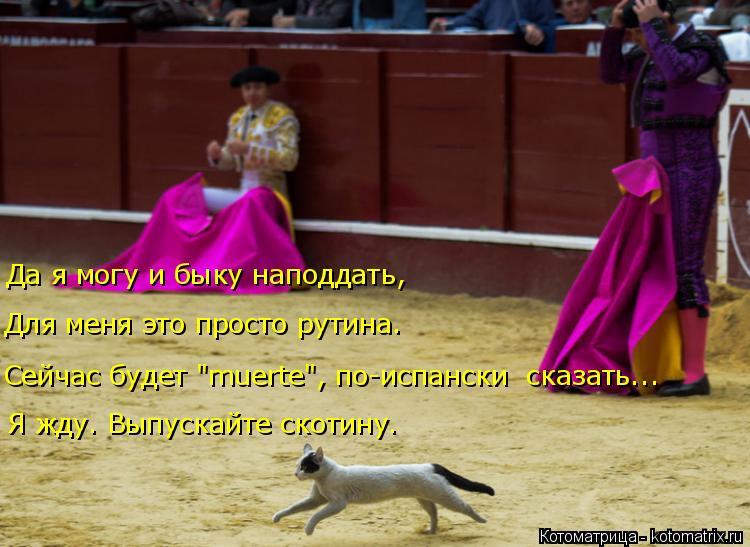 """Котоматрица: Да я могу и быку наподдать, Для меня это просто рутина. Сейчас будет """"muerte"""", по-испански  сказать... Я жду. Выпускайте скотину."""