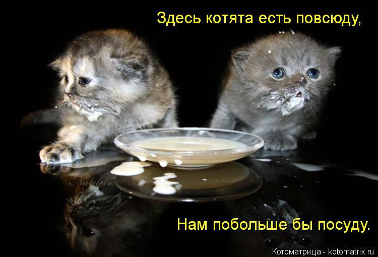Котоматрица: Здесь котята есть повсюду, Нам побольше бы посуду.