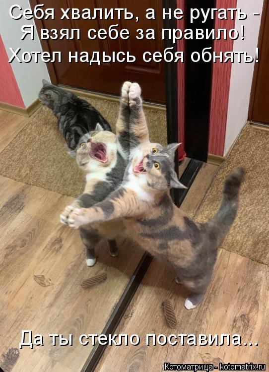 Котоматрица: Себя хвалить, а не ругать - Я взял себе за правило! Хотел надысь себя обнять! Да ты стекло поставила...