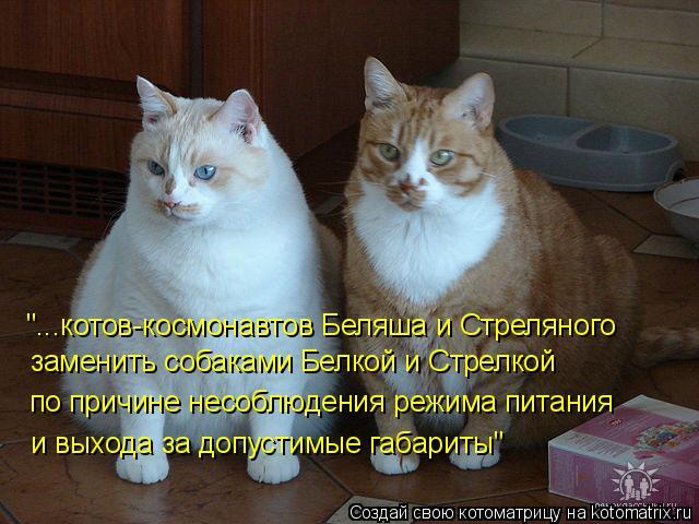 """Котоматрица: """"...котов-космонавтов Беляша и Стреляного  заменить собаками Белкой и Стрелкой по причине несоблюдения режима питания и выхода за допустимы"""