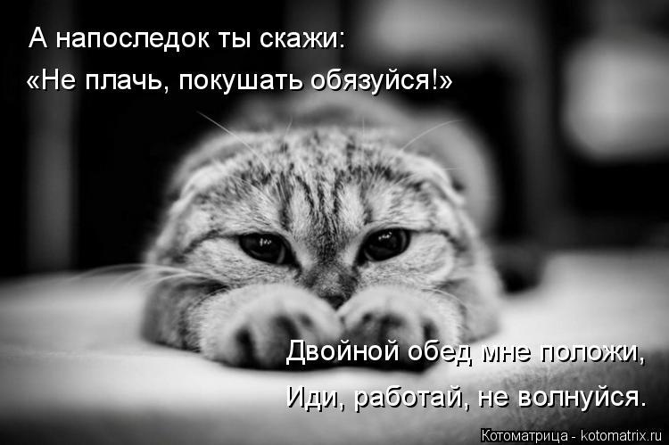 Котоматрица: А напоследок ты скажи: «Не плачь, покушать обязуйся!» Двойной обед мне положи, Иди, работай, не волнуйся.