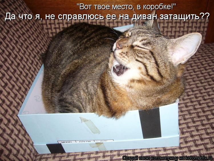 """Котоматрица: """"Вот твое место, в коробке!"""" Да что я, не справлюсь ее на диван затащить??"""