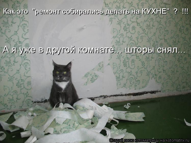 """Котоматрица: Как это  """"ремонт собирались делать на КУХНЕ""""  ?  !!! А я уже в другой комнате... шторы снял..."""