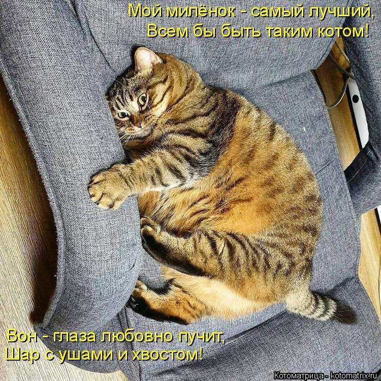 Котоматрица: Мой милёнок - самый лучший, Всем бы быть таким котом! Вон - глаза любовно пучит, Шар с ушами и хвостом!