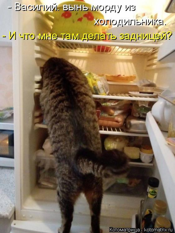 Котоматрица: - Василий. вынь морду из  холодильника. - И что мне там делать задницей?