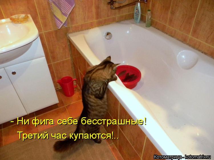Котоматрица: - Ни фига себе бесстрашные!  Третий час купаются!..