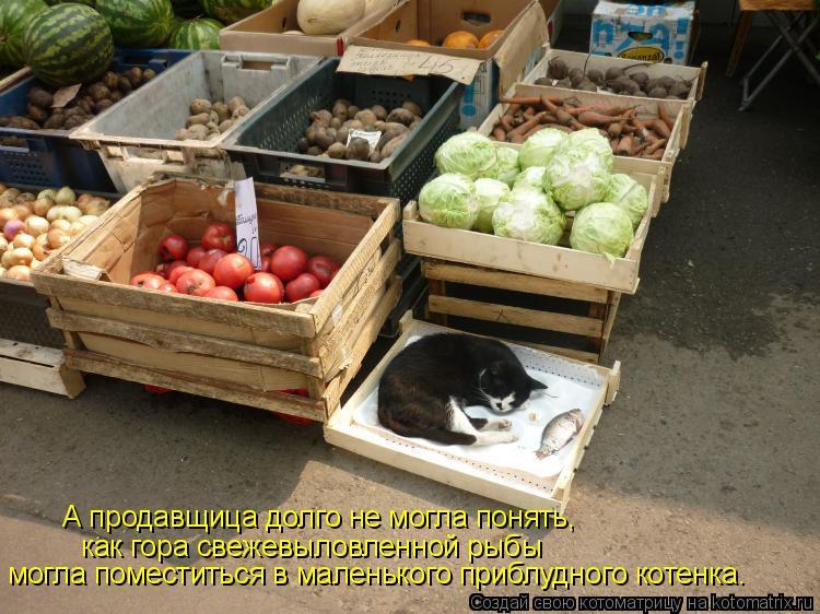 Котоматрица: А продавщица долго не могла понять, могла поместиться в маленького приблудного котенка. как гора свежевыловленной рыбы