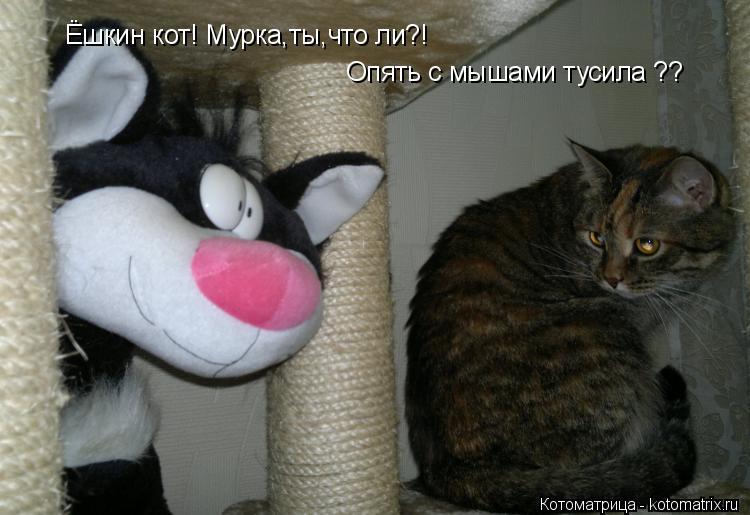 Котоматрица: Ёшкин кот! Мурка,ты,что ли?! Опять с мышами тусила ??