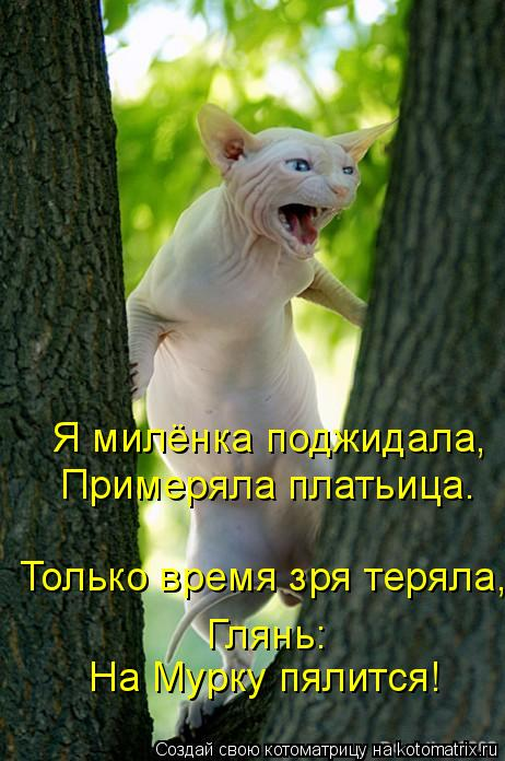 Котоматрица: Я милёнка поджидала, Примеряла платьица. Только время зря теряла, Глянь: На Мурку пялится!