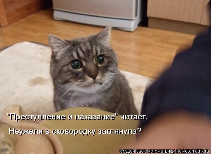 """Котоматрица: """"Преступление и наказание"""" читает.  Неужели в сковородку заглянула?"""