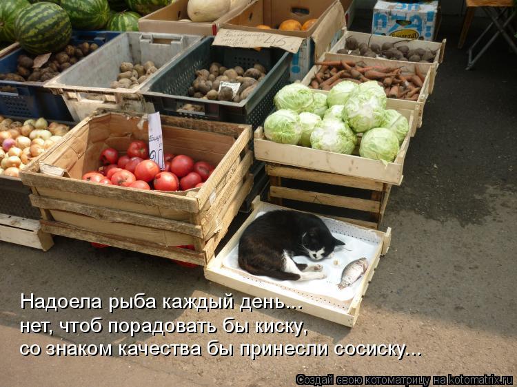 Котоматрица: Надоела рыба каждый день... нет, чтоб порадовать бы киску, со знаком качества бы принесли сосиску...