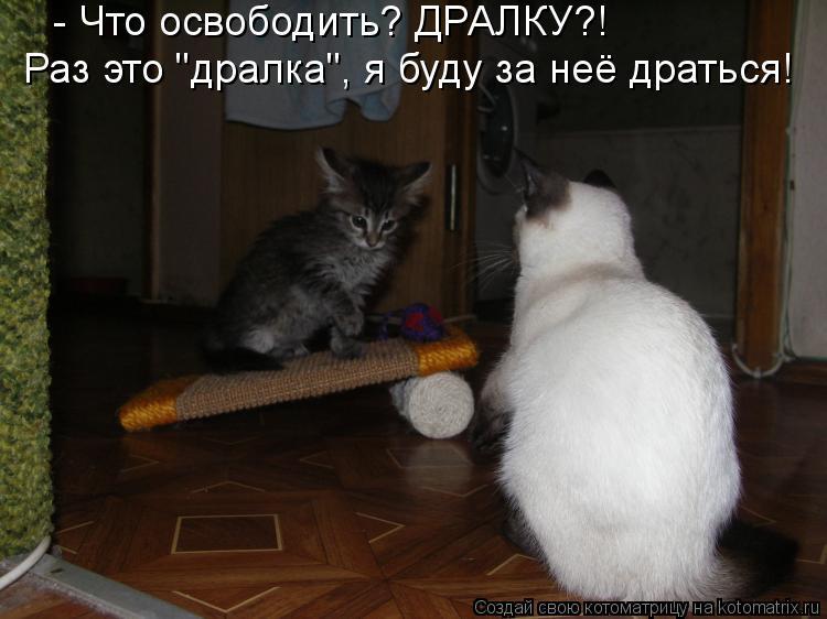 """Котоматрица: - Что освободить? ДРАЛКУ?! Раз это """"дралка"""", я буду за неё драться!"""
