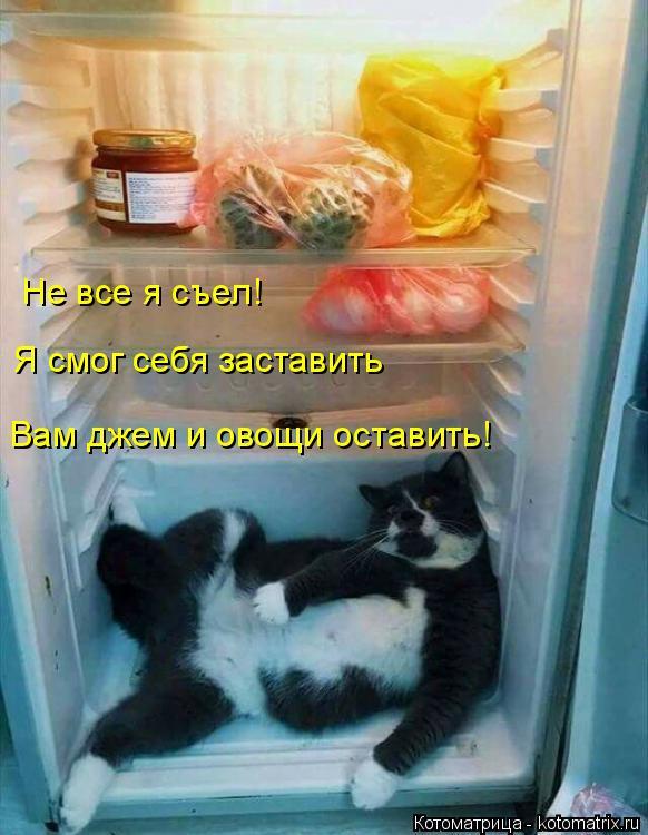 Котоматрица: Не все я съел! Я смог себя заставить Вам джем и овощи оставить!