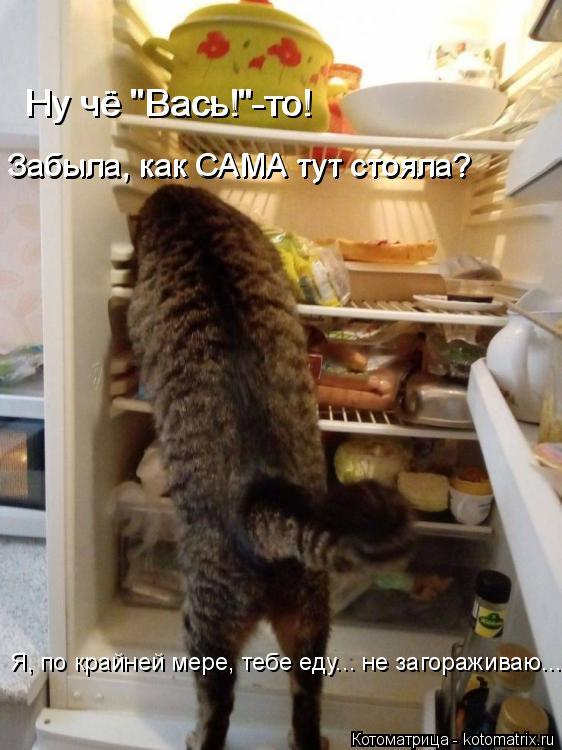 "Котоматрица: Я, по крайней мере, тебе еду... не загораживаю... Забыла, как САМА тут стояла?  Забыла, как САМА тут стояла?  Ну чё ""Вась!""-то! Ну чё ""Вась!""-то!"