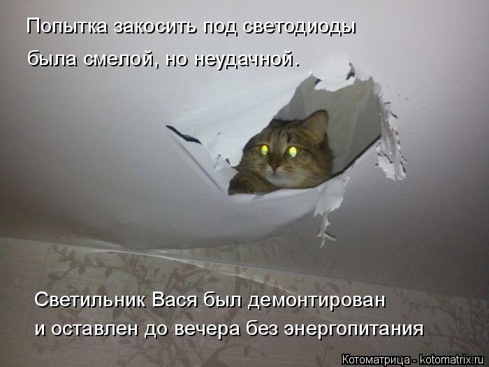 Котоматрица: Попытка закосить под светодиоды была смелой, но неудачной.  Светильник Вася был демонтирован  и оставлен до вечера без энергопитания