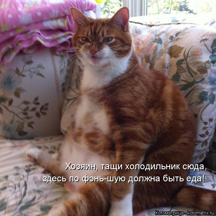 Котоматрица: Хозяин, тащи холодильник сюда, здесь по фэнь-шую должна быть еда!