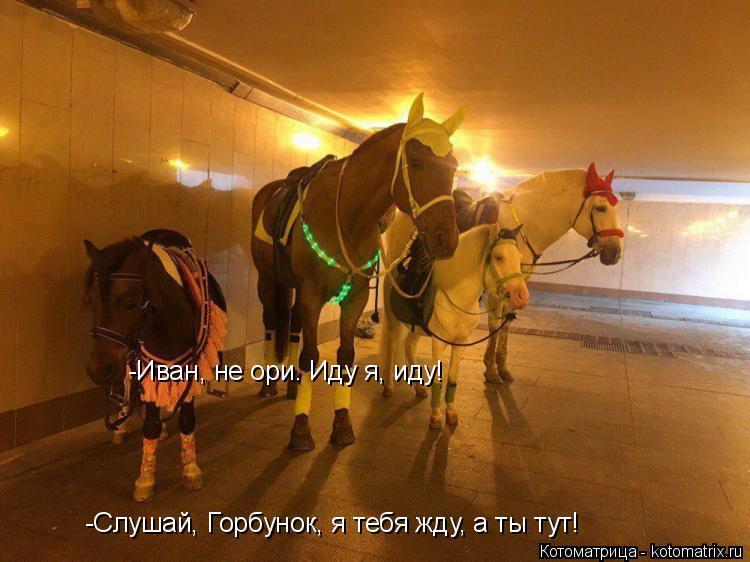 Котоматрица: -Слушай, Горбунок, я тебя жду, а ты тут! -Иван, не ори. Иду я, иду!