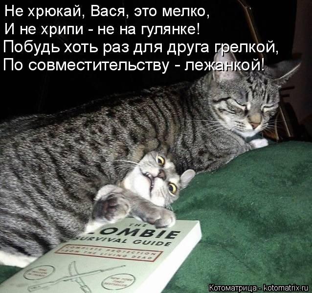 Котоматрица: Не хрюкай, Вася, это мелко, И не хрипи - не на гулянке! Побудь хоть раз для друга грелкой, По совместительству - лежанкой!