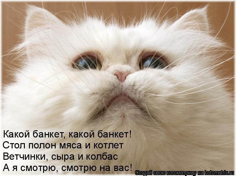 Котоматрица: Какой банкет, какой банкет! Стол полон мяса и котлет Ветчинки, сыра и колбас А я смотрю, смотрю на вас!