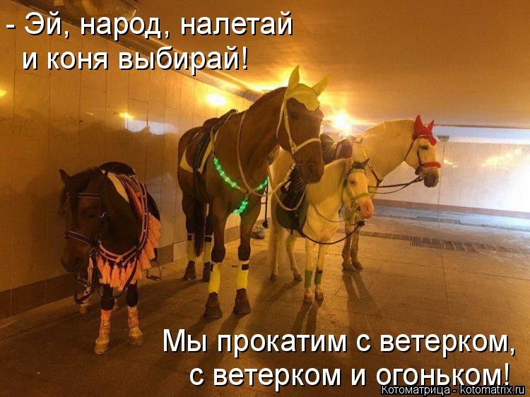 Котоматрица: - Эй, народ, налетай  и коня выбирай! Мы прокатим с ветерком, с ветерком и огоньком!