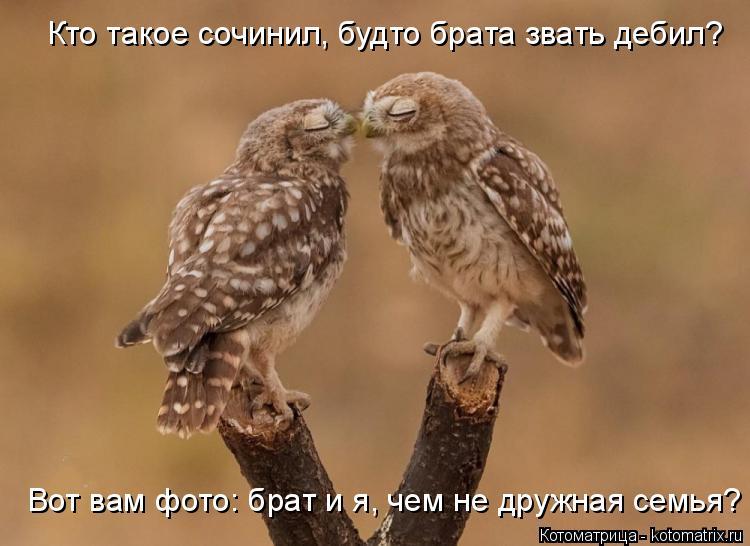Котоматрица: Кто такое сочинил, будто брата звать дебил? Вот вам фото: брат и я, чем не дружная семья?