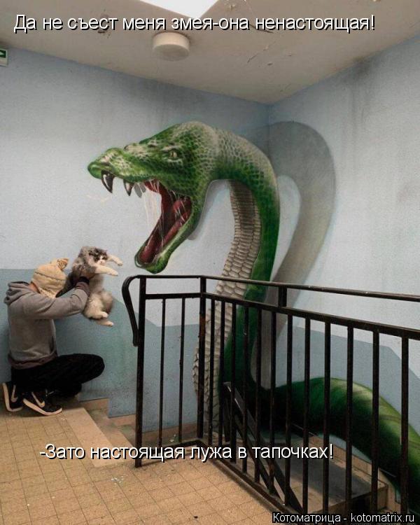 Котоматрица: Да не съест меня змея-она ненастоящая!  -Зато настоящая лужа в тапочках!