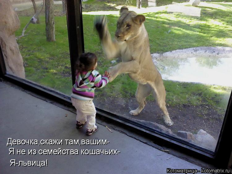 Котоматрица: Девочка,скажи там,вашим- Я не из семейства кошачьих- Я-львица!