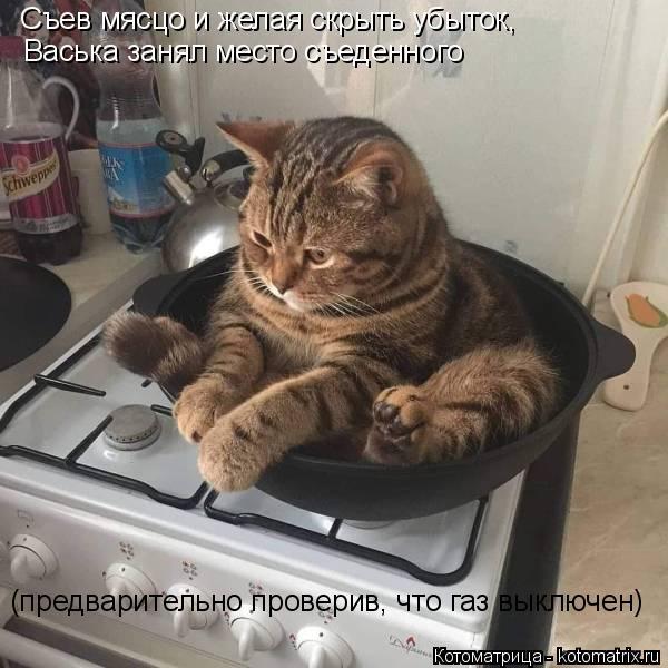 Котоматрица: Съев мясцо и желая скрыть убыток, Васька занял место съеденного (предварительно проверив, что газ выключен)