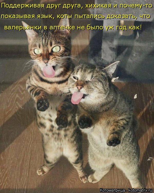 Котоматрица: Поддерживая друг друга, хихикая и почему-то   валерьянки в аптечке не было уж год как! показывая язык, коты пытались доказать, что