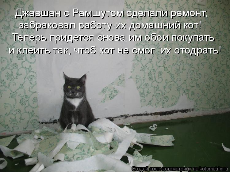 Котоматрица: Джавшан с Рамшутом сделали ремонт, забраковал работу их домашний кот! Теперь придется снова им обои покупать и клеить так, чтоб кот не смог