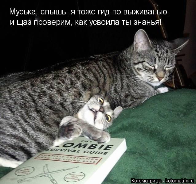 Котоматрица: Муська, слышь, я тоже гид по выживанью,  и щаз проверим, как усвоила ты знанья!